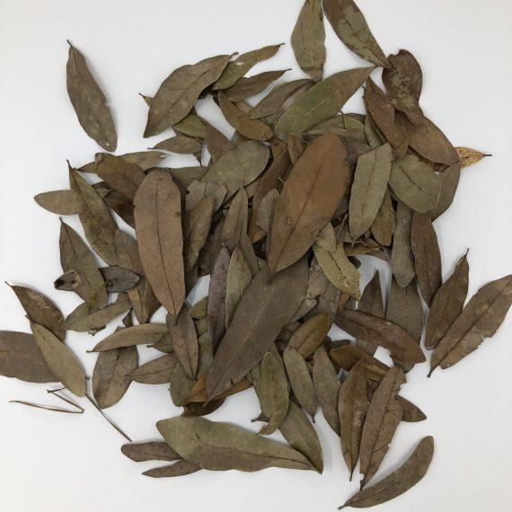 Tincman Herps Premium Oak Leaves (Gallon Bag)